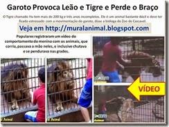 Garoto Provoca Leão e Tigre e Perde o_thumb[1]