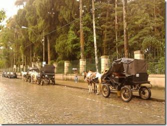 passeios-de-carruagem-em-petropolis
