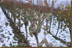 Влияние влаги на рост и развитие виноградного куста 2