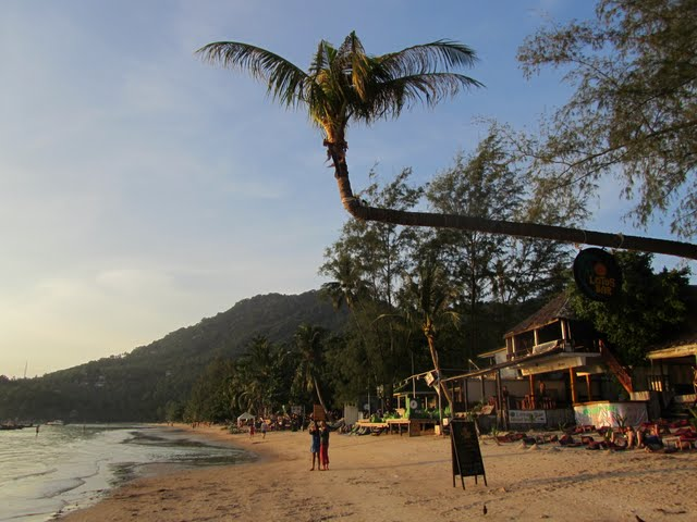 Palm tree in Sairee Beach