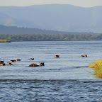 Bootssafari Mana Pools Nationalpark, Flusspferde © Foto: Ulrike Pârvu | Outback Africa Erlebnisreisen