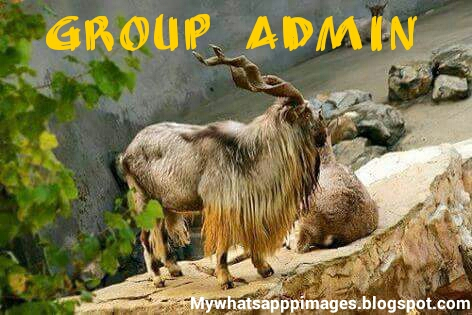 Dp for group admin Whatsapp Admin Jokes pics