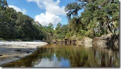 Tree across the river-1
