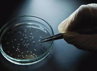 Grippe aviaire, grippe porcine, coronavirus, ebola et zika: ces virus qui rapportent gros…