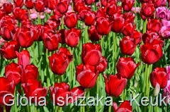 Glória Ishizaka - Keukenhof 2015 - tulipa 25