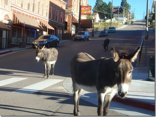 CrippleCreekDonkeys
