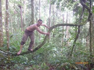 Penjaga Hutan Lindung Tormatutung