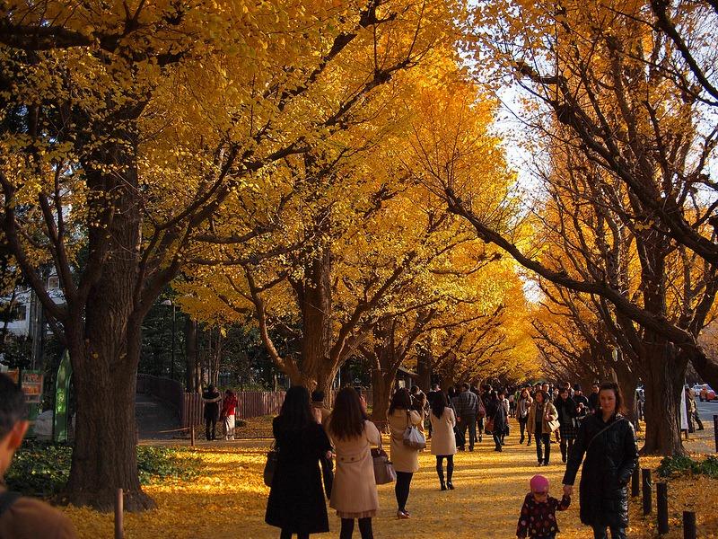ginkgo-avenue-tokyo-14