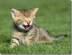 gatos divertidos buscoimagenes (8)