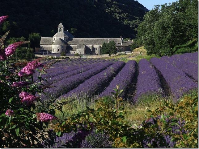 Abbaye_de_Sénanque_(Gordes-Vaucluse)_vue_du_Nord
