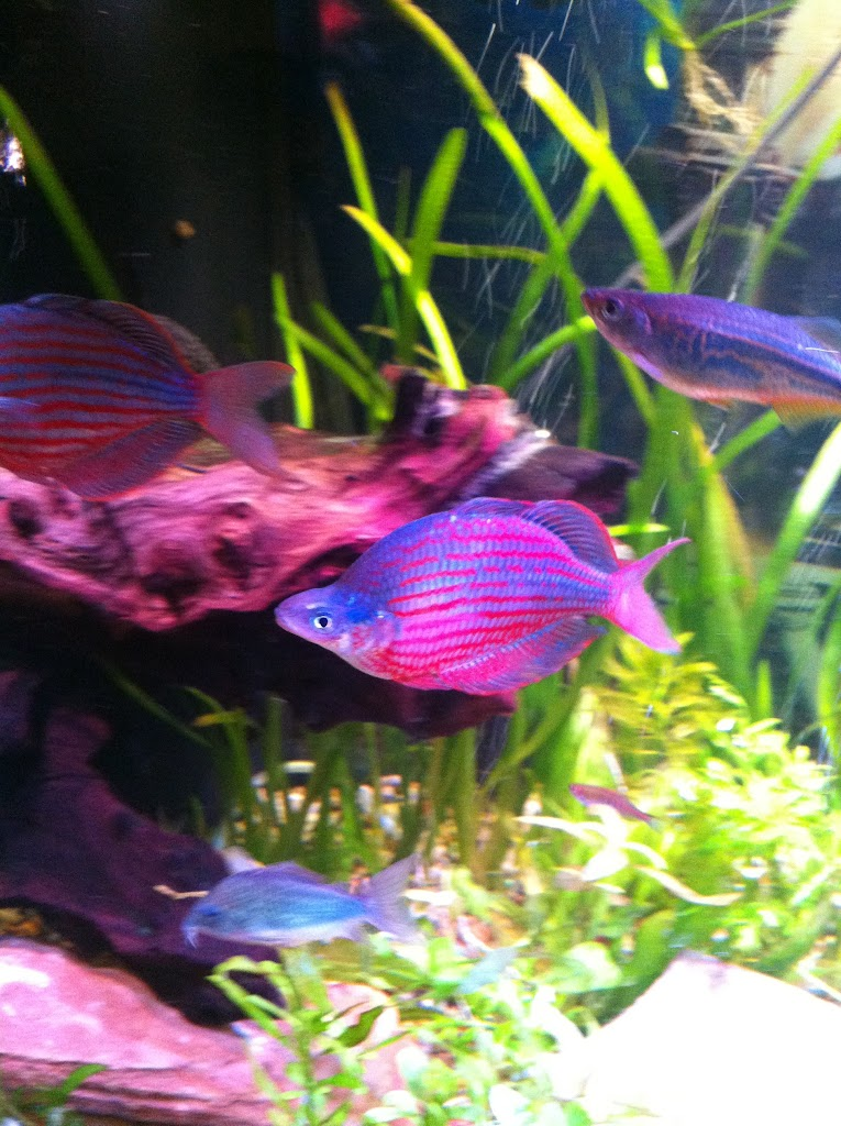Cell phone pictures of my 75 gallon tank IMAGE_8C989539-F8FA-4BD3-81C2-C68F970F3A68