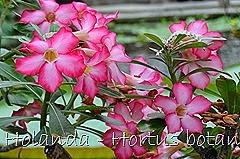 Glória Ishizaka - Hortus Botanicus Leiden - 77