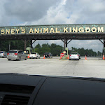 Going to the Animal Kingdom in Disney in FL 06092011