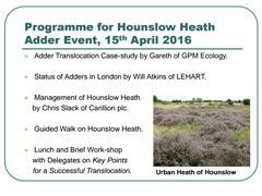 Adder Translocation at Hounslow Heath - PDF