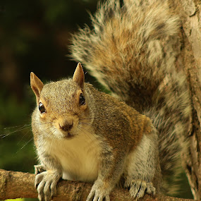 by Frank Gray - Uncategorized All Uncategorized ( city street and park, mammals, animals, squirrels, one subject, nature in close up )
