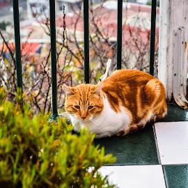 Serenity by Arthur Lima - Animals - Cats Portraits ( chile, cat, tiles, valparaiso, portrait )