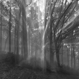 Light Streaks by Sue Adorjan - Black & White Landscapes