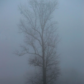 Spooky Fog by Christy Stanford - Landscapes Weather ( foggy, winter, nature, tree, fog, spooky )