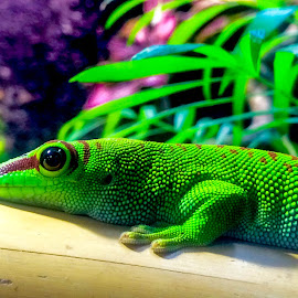 Lizard by Jennette Marty - Instagram & Mobile iPhone