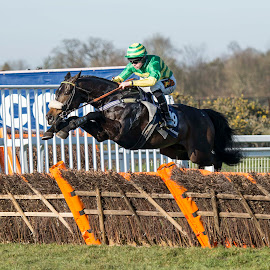 Ravin Black pings the first by Mick Stevens - Sports & Fitness Other Sports ( horse, horse racing, sport, sandown park )