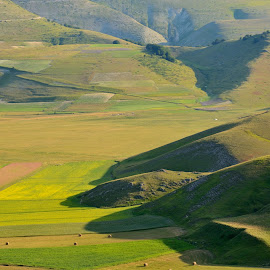 Castelluccio 27 by Bruno Brunetti - Landscapes Prairies, Meadows & Fields ( nature, colors, flowers, italy, castelluccio,  )