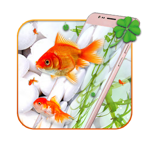 Gold koi fish live wallpaper android apps on google play for Koi fish size