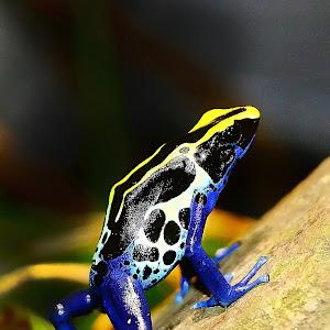The frog.jpg