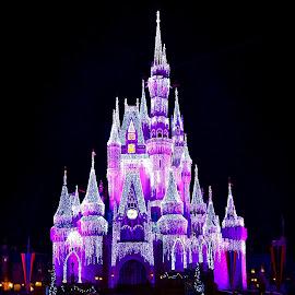 Disney castle by Amol Polke - City,  Street & Park  City Parks