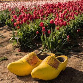 Wooden Shoes by An Vo - Artistic Objects Still Life ( portland, wooden shoes tulip farm, flowers,  )