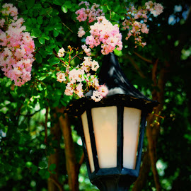 Street Lamp by Rhonda Kay - City,  Street & Park  City Parks