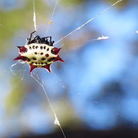 Spidy haven!! by Nancy Mullin - Novices Only Macro