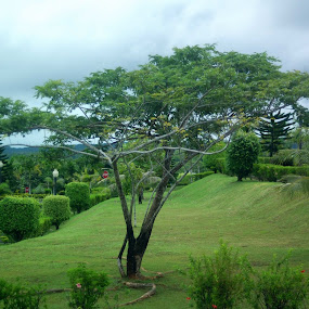 Capitol grounds by CRISTINA  CASTRO - Nature Up Close Trees & Bushes ( tree, grass, ground, bush, palau, melekeok capitol )