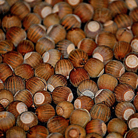 Acorns Galore by Christy Stanford - Nature Up Close Other Natural Objects ( many, multiple, natural, acorn, acorns )