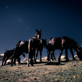 Family by Hany Hossameldin - Animals Horses