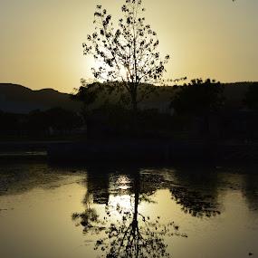 by Varun Jain - Nature Up Close Trees & Bushes