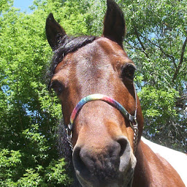Sunshine Rainbow in her rainbow halter by Lois York - Animals Horses (  )