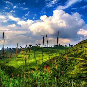 Perkebunan teh by Ridwan Adhitama - Landscapes Mountains & Hills ( tea, landscape )