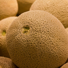 cantaloupes by Katie Woolwine - Food & Drink Fruits & Vegetables ( fruit, melon, pwcfruit, cantaloupes, tan )