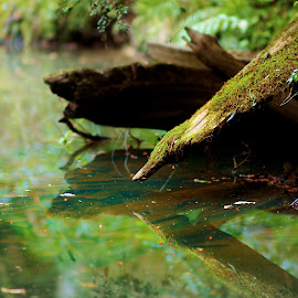 Softly by Lily M - Nature Up Close Water ( water, nature, green, photo, log, soft, renewal, trees, forests, natural, scenic, relaxing, meditation, the mood factory, mood, emotions, jade, revive, inspirational, earthly )