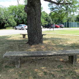 Bench in a shade by Maricor Bayotas-Brizzi - City,  Street & Park  City Parks