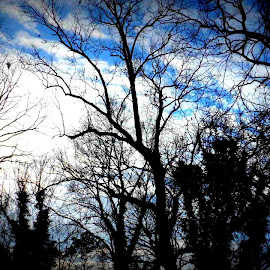 Beautiful Skies  by Pamm Smith - Nature Up Close Trees & Bushes