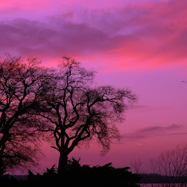 I took this about 10 years ago in Maryland with a Minolta 35mm by Jeffrey Brown - Landscapes Sunsets & Sunrises