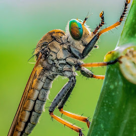 by Surya Forty-Six - Animals Insects & Spiders