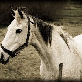 Beautiful girl  by Helly Maree - Animals Horses ( wild and free, beautiful, horse )