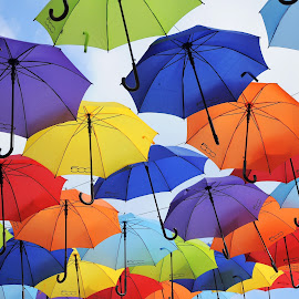 Umbrellas by Maja Tomic - Artistic Objects Other Objects ( red, umbrellas, umbrella )
