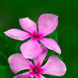 201711050858 Couple In Love by Steven De Siow - Flowers Flower Gardens ( pink flower, flower garden, nature, couple, flower )