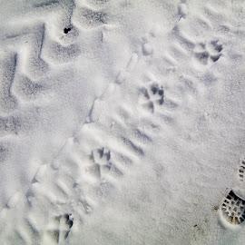 ... by Hale Yeşiloğlu - Abstract Patterns ( footprints, winter, trace, track, tracks, pug, spoor )