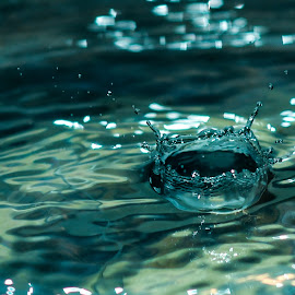 by Deven Dadbhawala - Nature Up Close Water