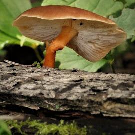 by Denise O'Hern - Nature Up Close Mushrooms & Fungi (  )