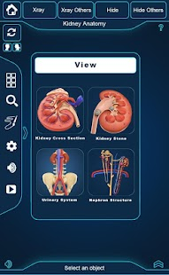 Kidney Anatomy screenshot for Android